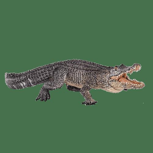 mô hình cá sấu Mỹ