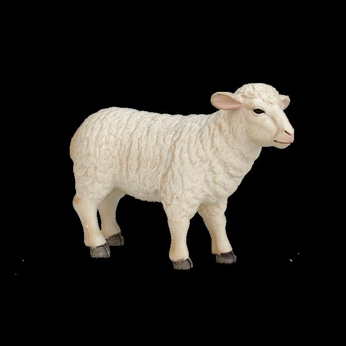 mô hình cừu cái
