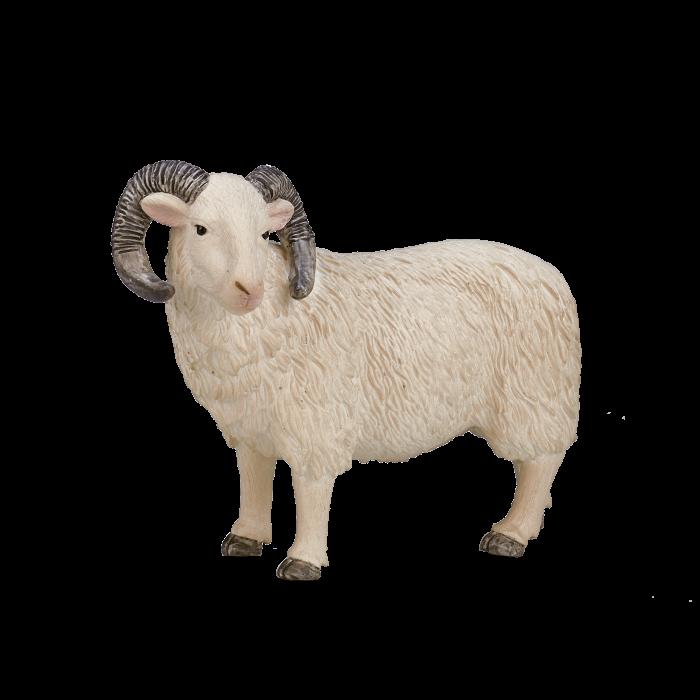 mô hình cừu đực