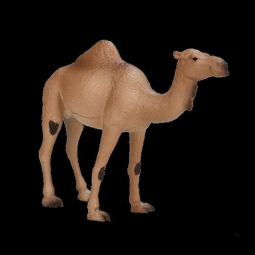mô hình lạc đà