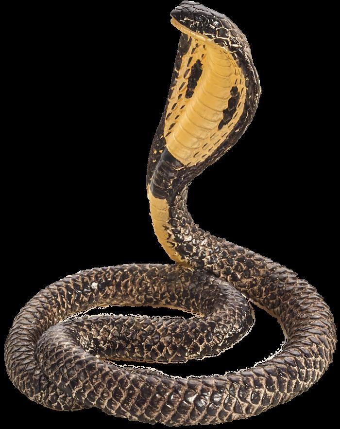 mô hình rắn hổ mang
