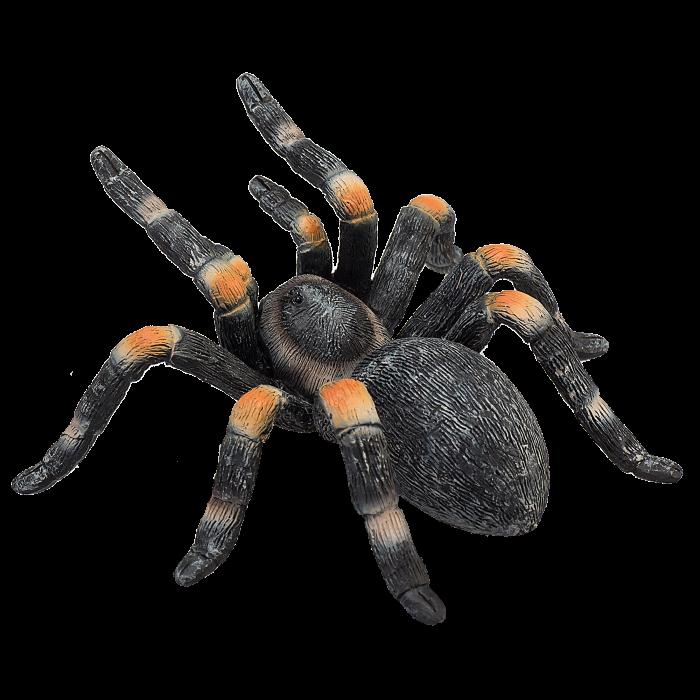 mô hình nhện