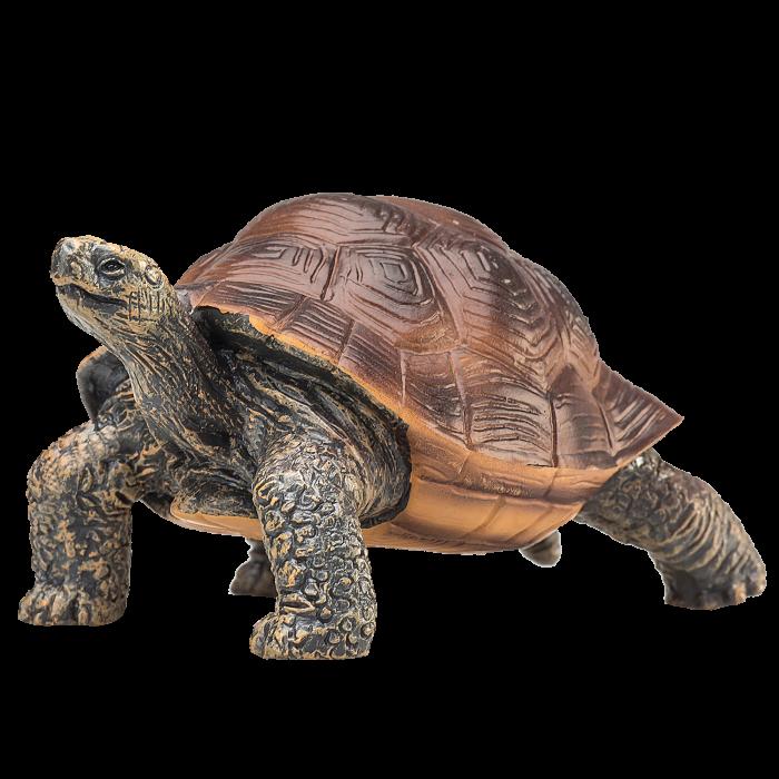 mô hình rùa