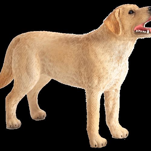 mô hình chó Labrador