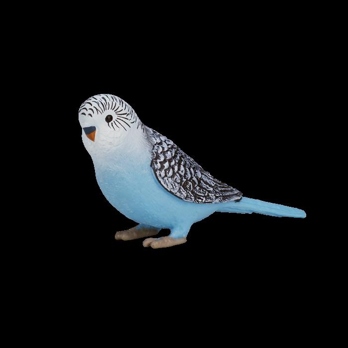 mô hình vẹt xanh dương