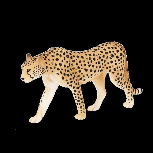 mô hình báo cheetah đực