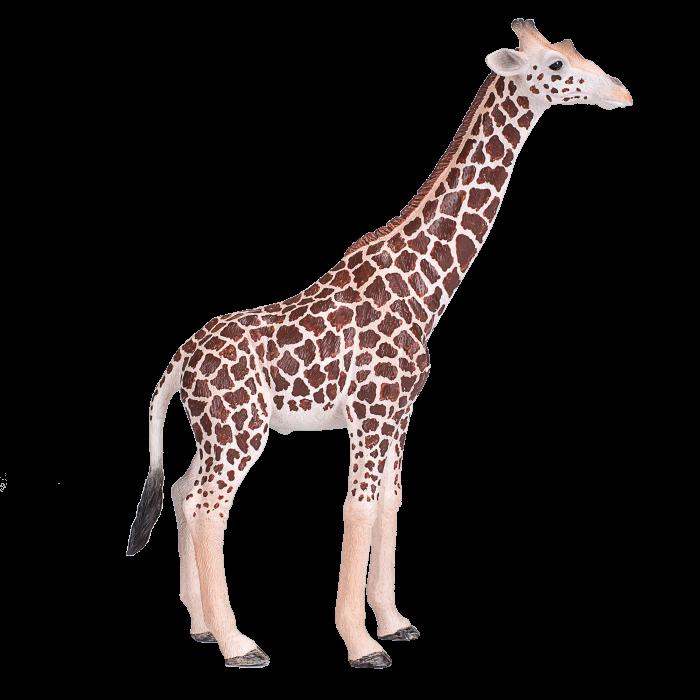 mô hình hươu cao cổ đực