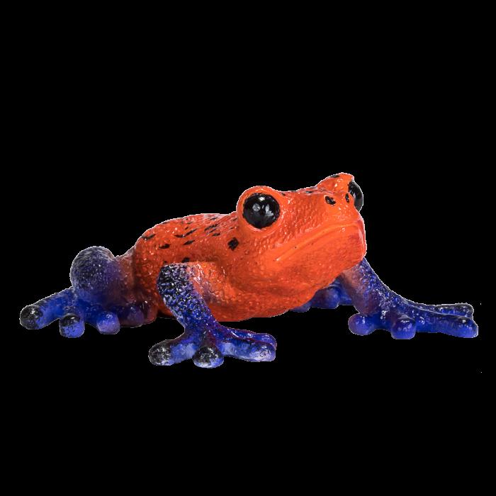 mô hình ếch