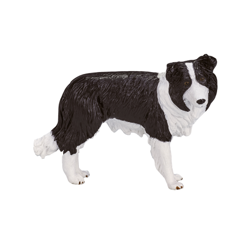 mô hình chó Border Collie