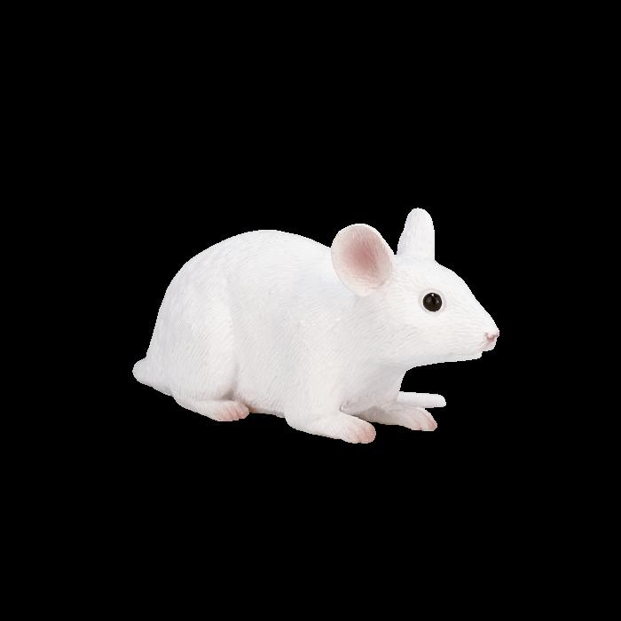 mô hình chuột bạch