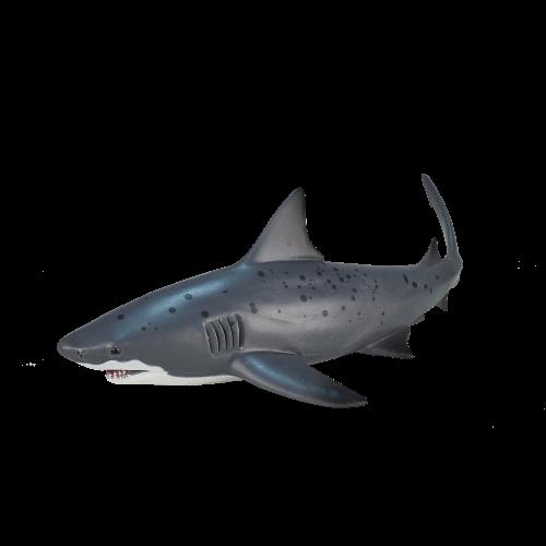 Mô hình cá mập bò